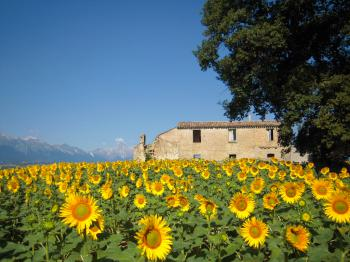 Cottage/Homestead/Country House Abruzzo - Montefino